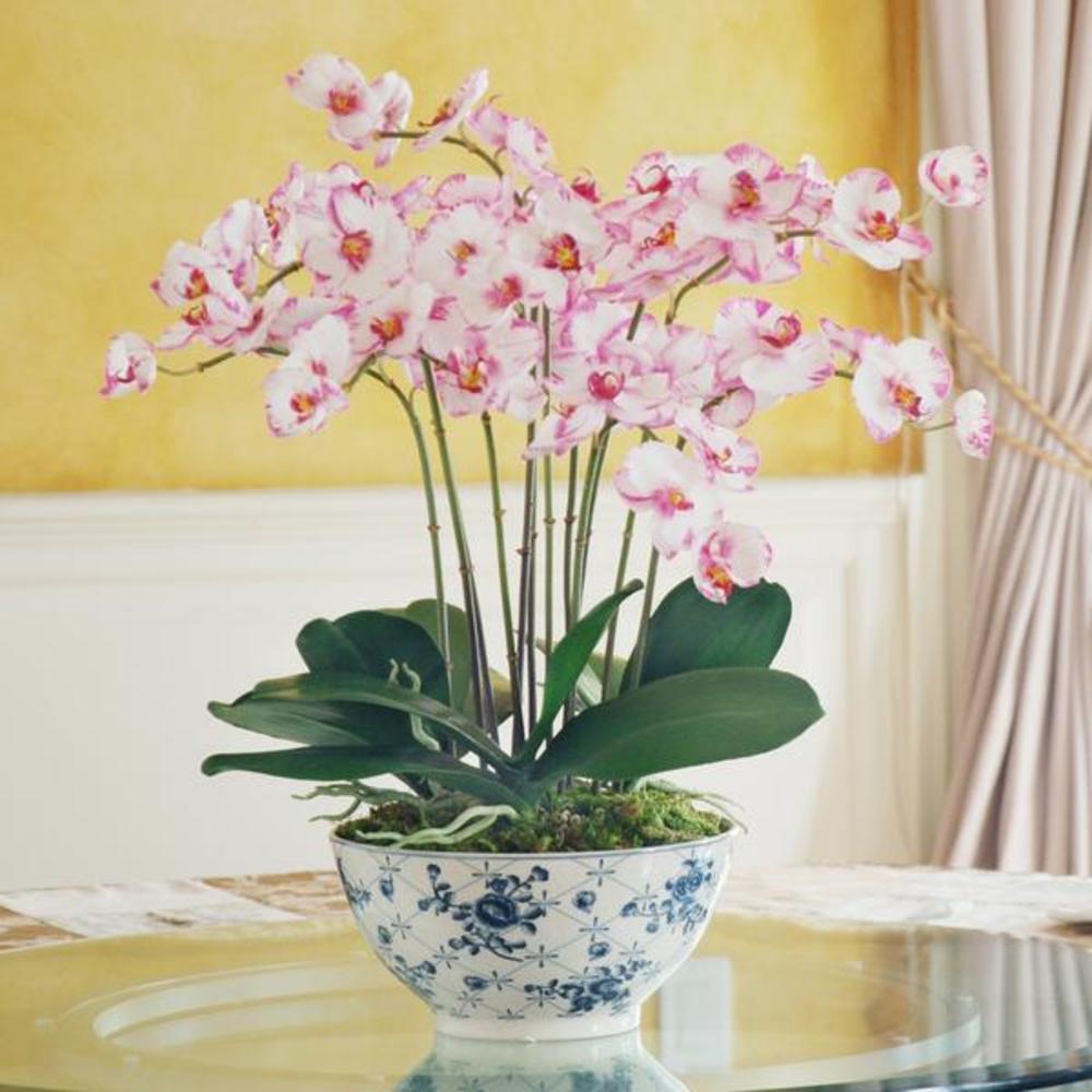Winward - Orchid Plant, Rose Trellis Bowl (Purple/White)