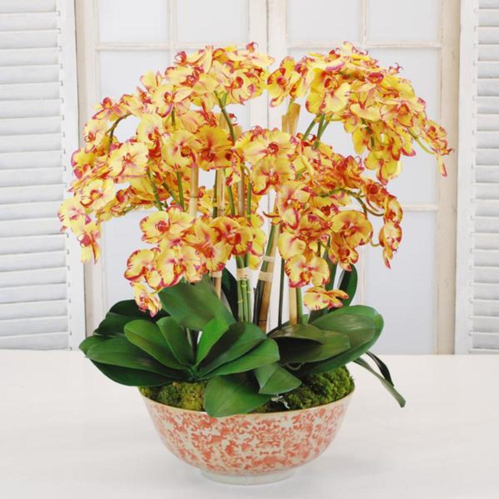 Winward - Orchid Phalaenopsis, Longlife Bow (Yellow)