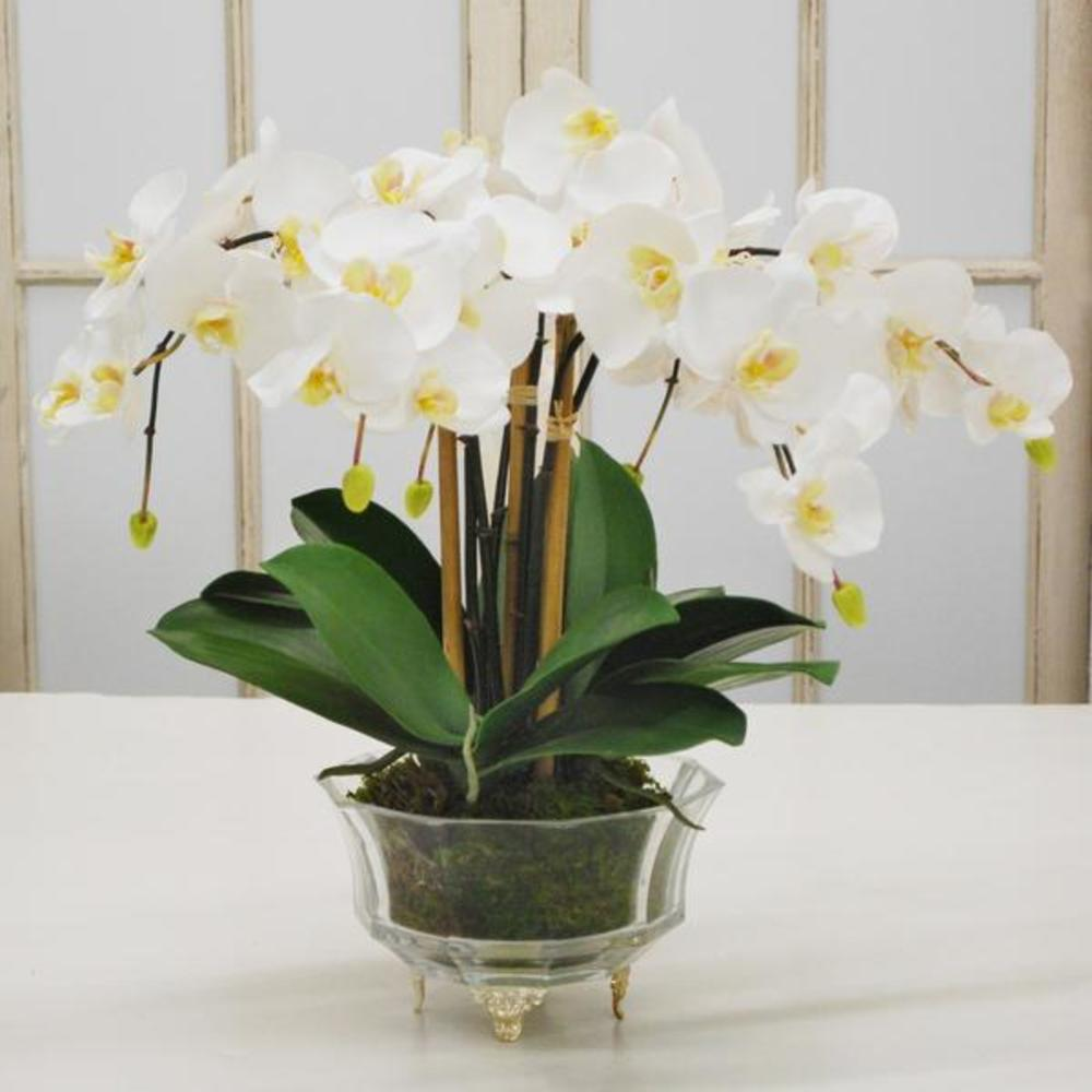 Winward - Phalaenopsis Orchid, Crystal Glass (White)