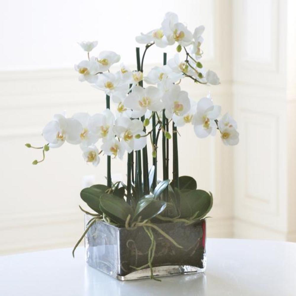 Winward - Phalaenopsis, Square Vase (White)