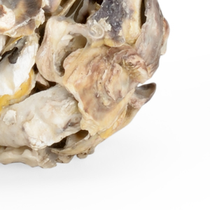 Thumbnail of Chelsea House - Oyster Shell Candle Holder, Pair
