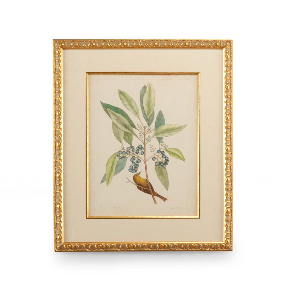 Chelsea House - Catesby Bird and Botanical V