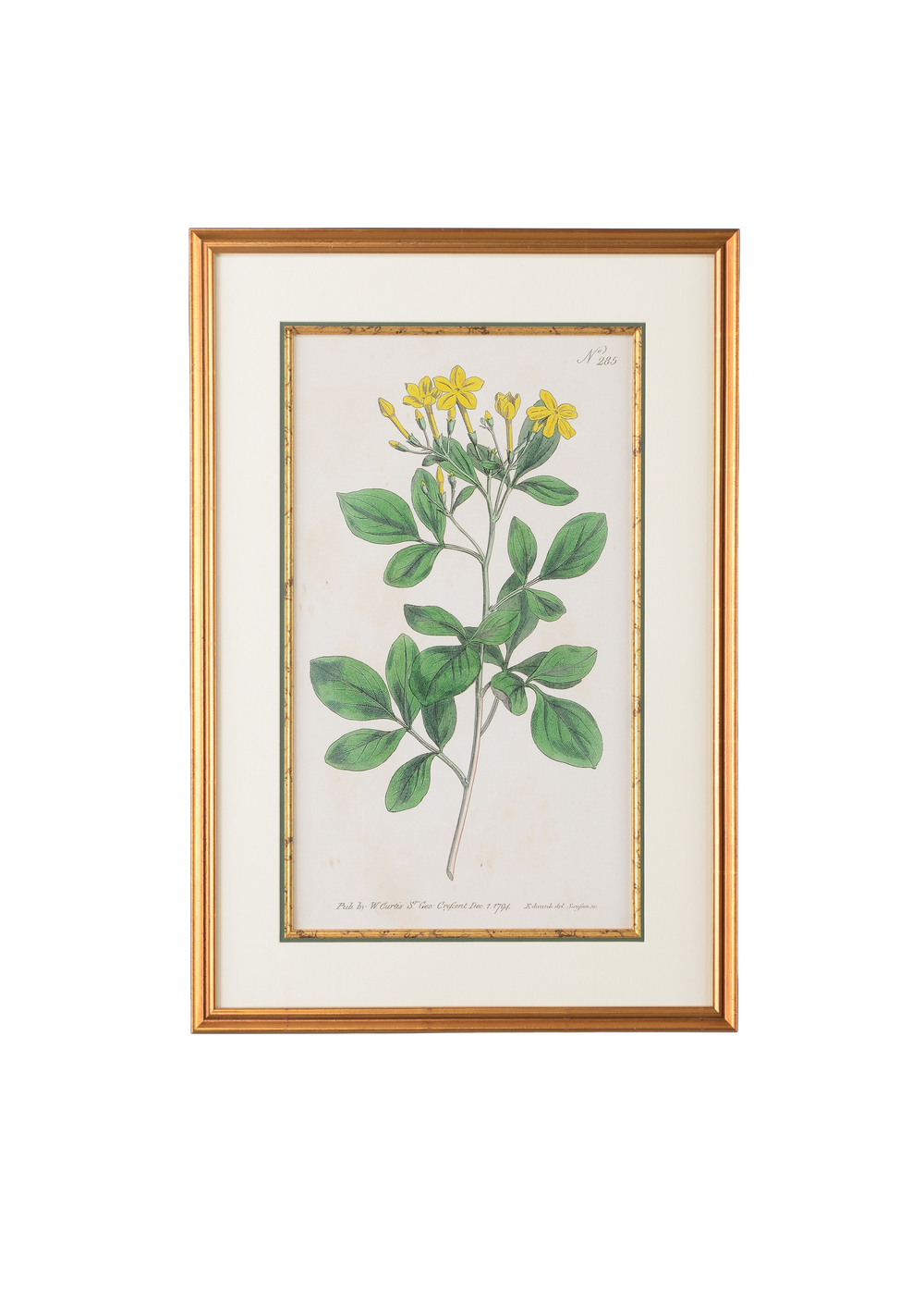 Chelsea House - Botanical Plate No. 285 Art