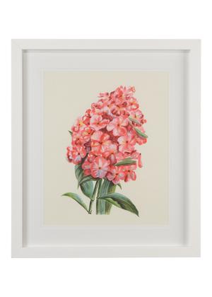 Thumbnail of Chelsea House - Flower Study I Art