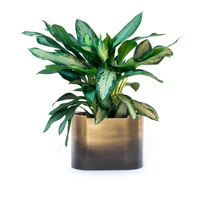 Thumbnail of FOUR HANDS - Cameron Ombre Planter