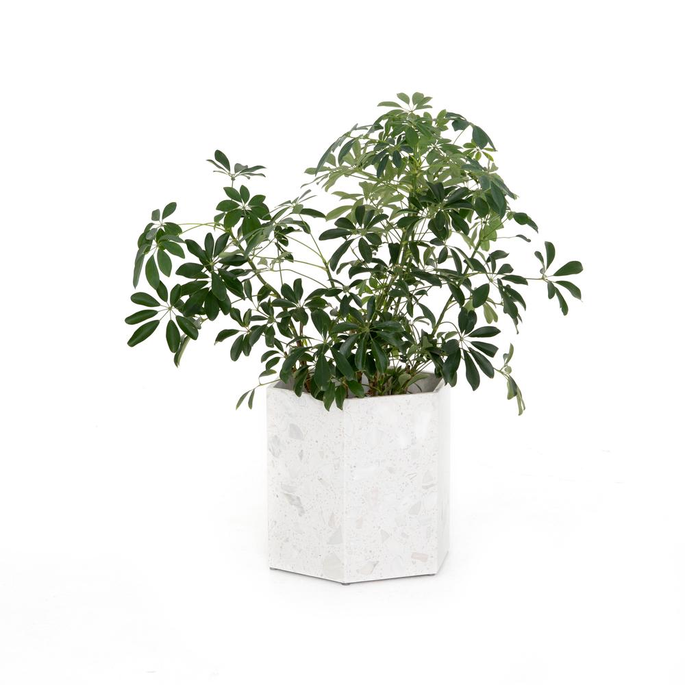 Four Hands - Toland Hexagon Planter, Set of 2