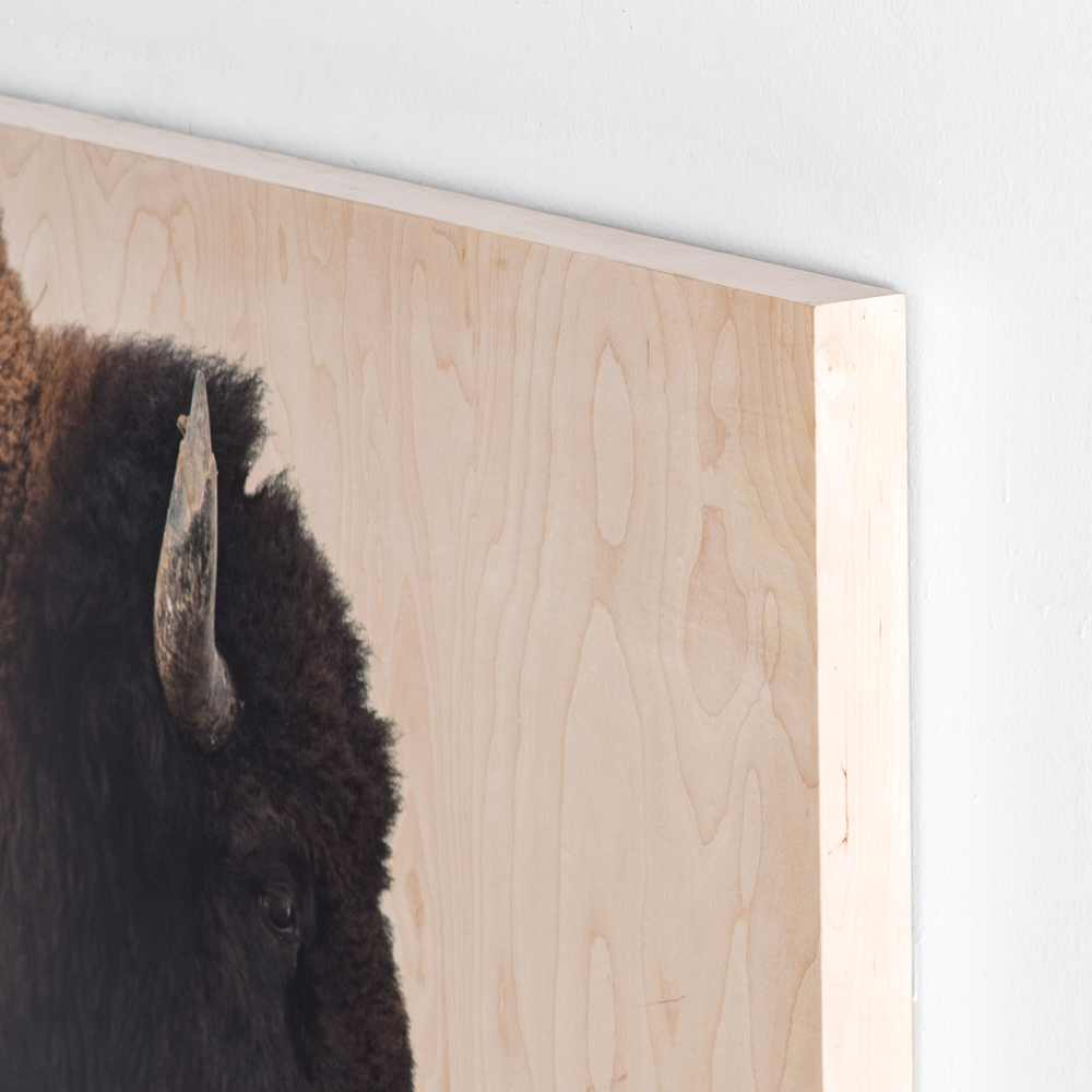 Four Hands - American Bison