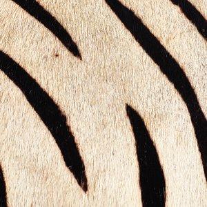 Thumbnail of Go Home - Zebra Boxes, Set/2