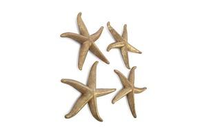 Thumbnail of Phillips Collection - Starfish