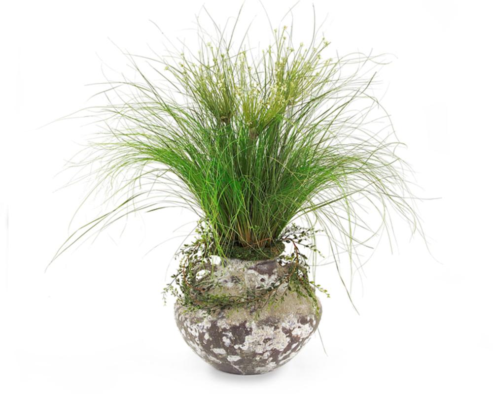 John Richard Collection - Alliums Grass