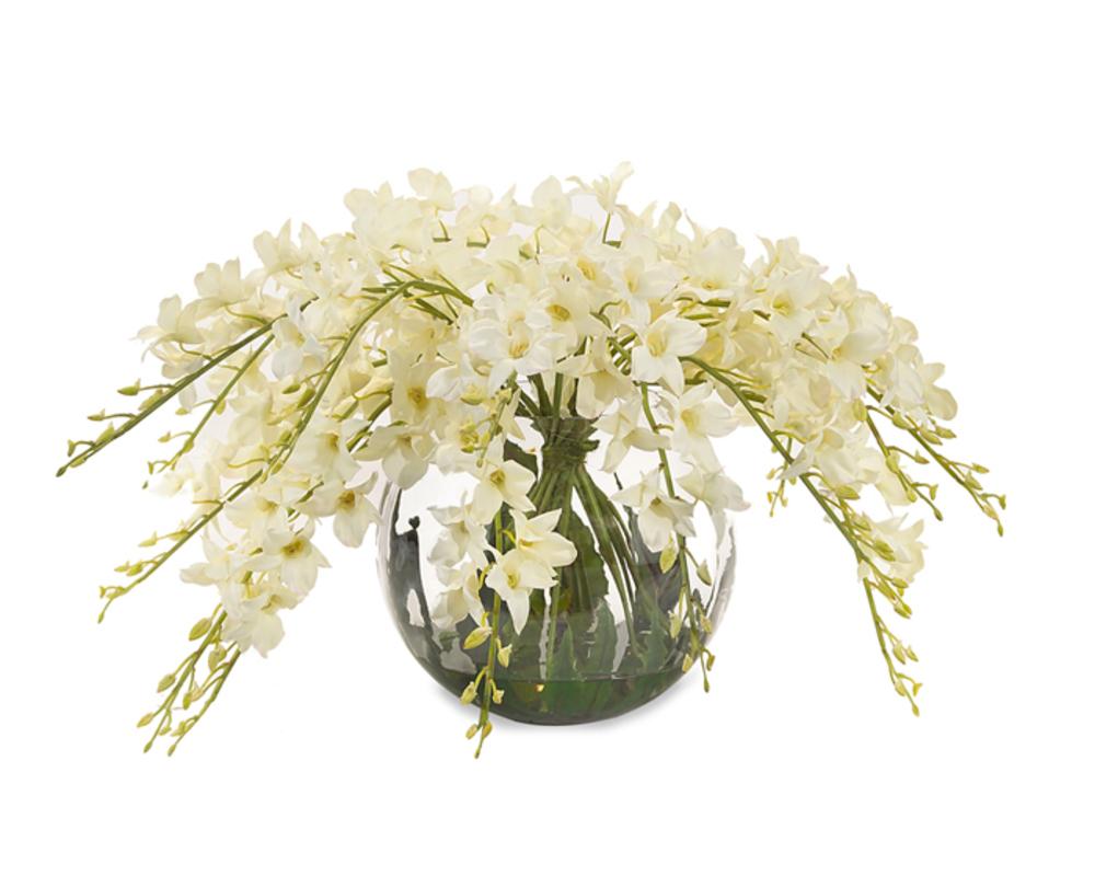 John Richard Collection - Enchanting Dendrobiums