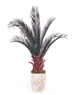 Thumbnail of John Richard Collection - Date Palm
