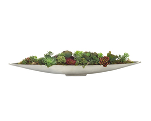 Thumbnail of John Richard Collection - Succulent Garden