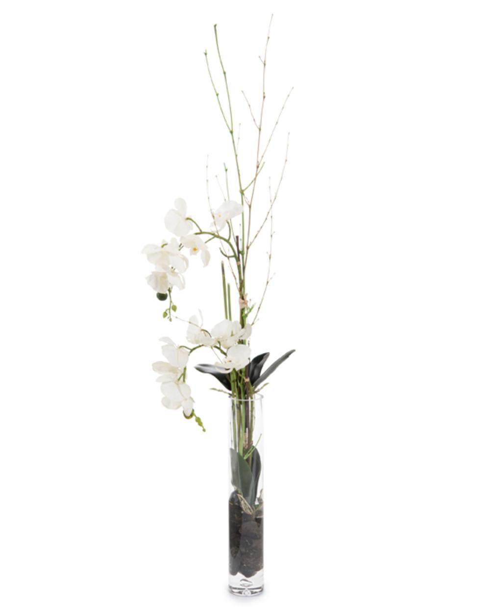 John Richard Collection - Slender Orchids