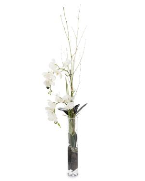 Thumbnail of John Richard Collection - Slender Orchids