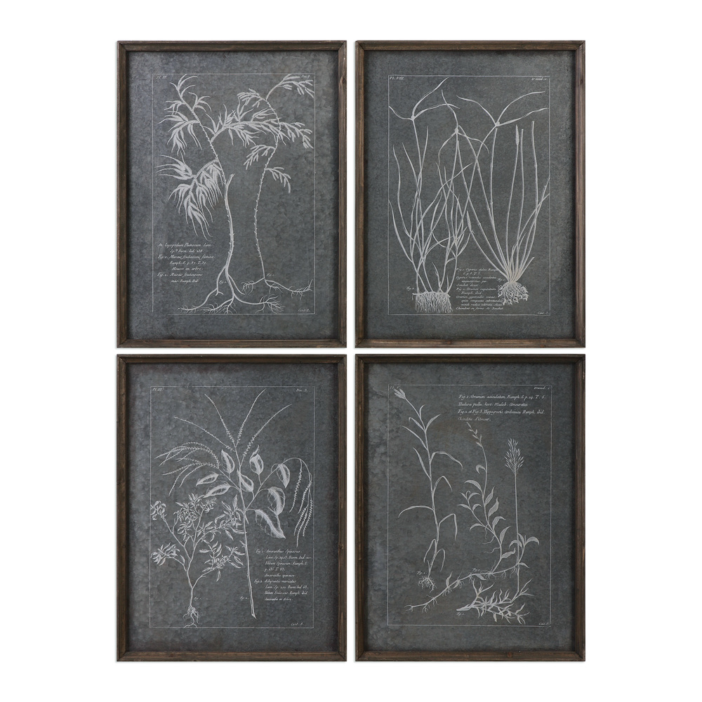 Uttermost Company - Root Study Framed Prints, Set/4
