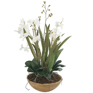 Thumbnail of Uttermost Company - Moth Orchid Planter