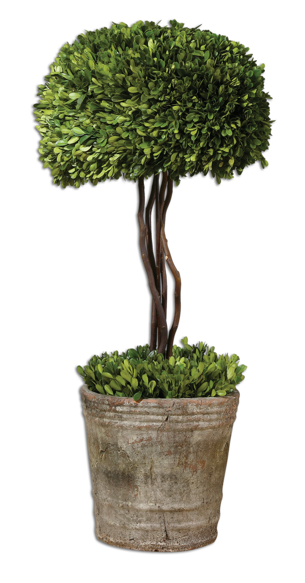 Uttermost Company - Preserved Boxwood, Tree Topiary
