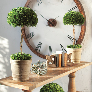 Thumbnail of Uttermost Company - Preserved Boxwood, Tree Topiary