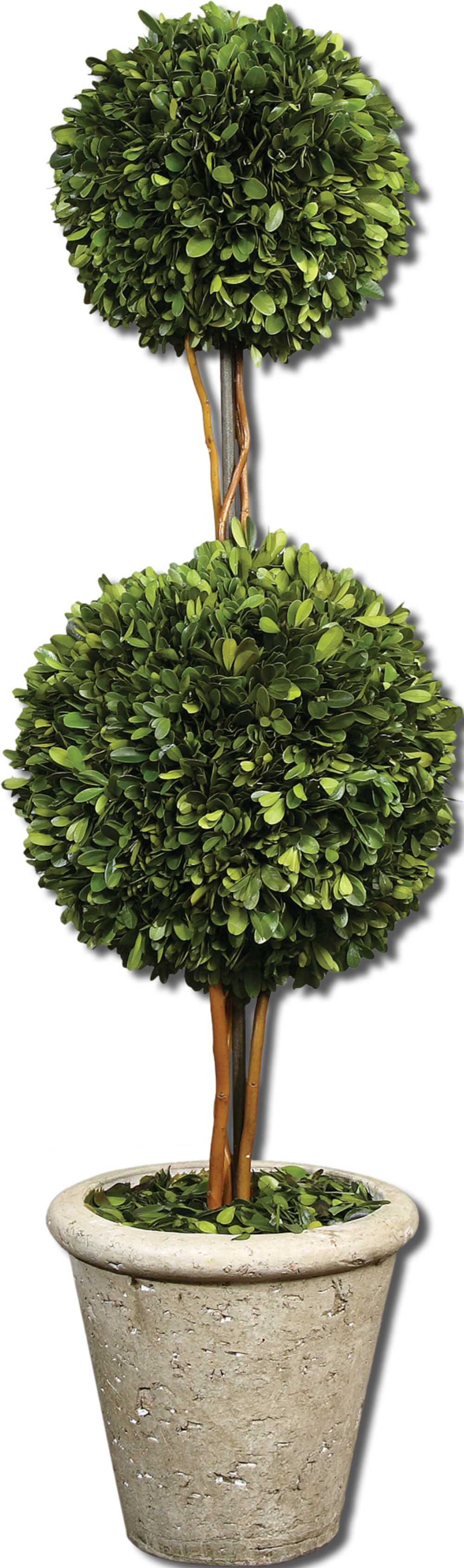 Uttermost Company - Preserved Boxwood, Two Sphere Topiary
