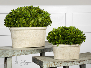 Thumbnail of Uttermost Company - Preserved Boxwood, Oval Domes, Set/2