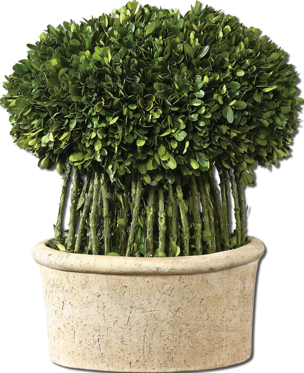 Uttermost Company - Willow Topiary Preserved Boxwood