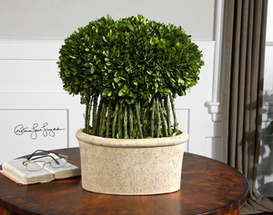 Thumbnail of Uttermost Company - Willow Topiary Preserved Boxwood