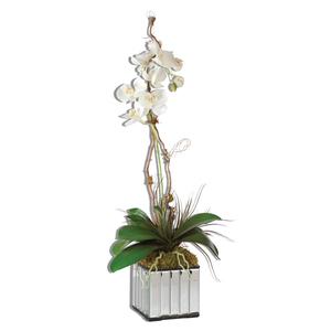 Thumbnail of Uttermost Company - Kaleama Orchids, White