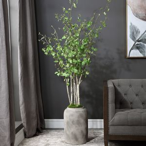 Thumbnail of Uttermost Company - Aldis Potted River Birch