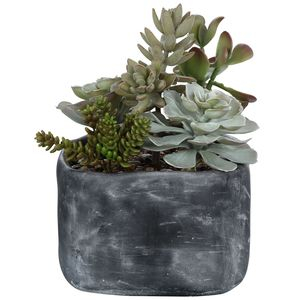 Thumbnail of Uttermost Company - Alverio Succulents