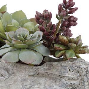 Thumbnail of Uttermost Company - Charita Succulents