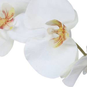Thumbnail of Uttermost Company - Eponine Orchid